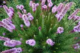 Highline mauve bouquet