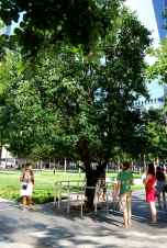 The 'Survivor Tree' -- the tree that withstood the attacks on the World Trade Centre.
