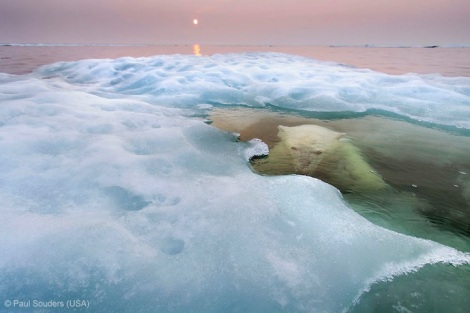 Animals in their Environment - Winner, Paul Souders (USA) for 'The Water Bear'