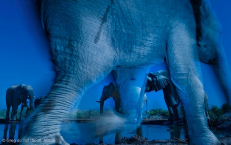 Essence of Elephants by 2013 Wildlife Photographer of the Year Greg du Toit (South Africa)