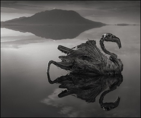 "Lake Natron in northern Tanzania turns birds and animals to stone. Temperatures in the lake can reach up to 60°C/140°F and the water has an extremely high soda and salt content which causes ""the creatures to calcify, perfectly preserved, as they dry."" (By Nick Brandt)"
