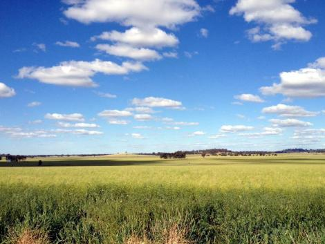 The rail trail is surrounded by paddocks and farmland.