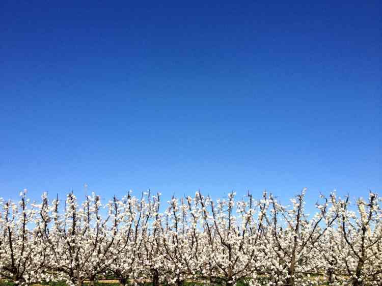 Orchardhoriz