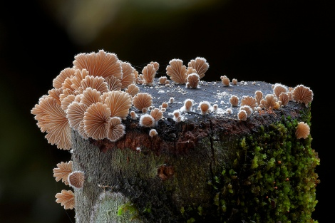 Fantastic fungi by Steve Axford