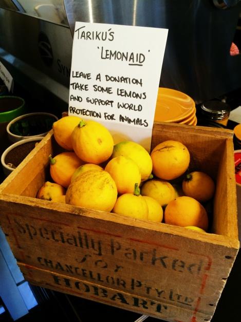 Tariku's lemon-aid lemons