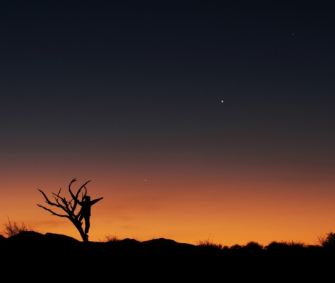 Three Planets in Conjunction: Sunset and flora of the African savannah afford a unique background for the planetary alignment of Jupiter, Venus and Mercury (Lóránd Fényes; Hungary)
