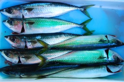 Packed like; Tsukiji Fish Market