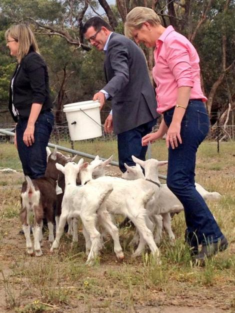 """Labor promises $7.8 million to make Bendigo TAFE a hub for agricultural studies"" (Via @annikasmethurst Twitter)"