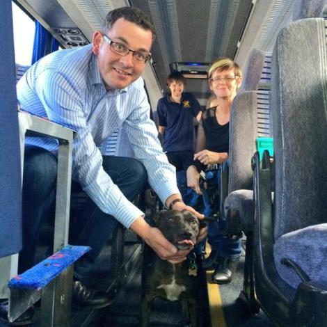 Four legged friend boards the big red bus to ask why Napthine failed to crack down on puppy farms (Via Victorian Labor Twitter)