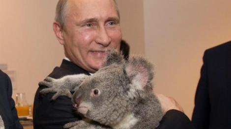 President Putin (Andrew Taylor/G20 Australia via Getty)