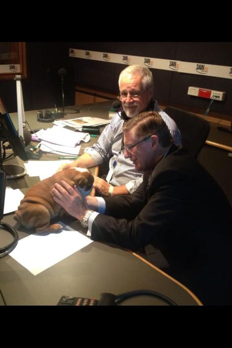 We've got a vet on hand to give Pixie one final check before she goes to her new home! (Via 3AW Melbourne Twitter)