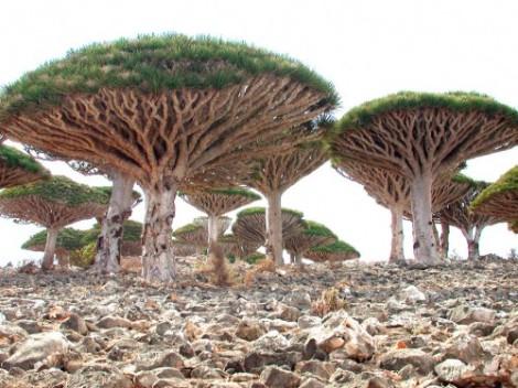 Yemen: Socotra