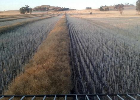 Major Plains, Victoria, 21 November 2015