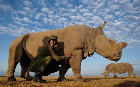 Caretaker Mohammed at Ol Pejeta Conservancy, Kenya, with one of the last five white rhino on planet (EPA)