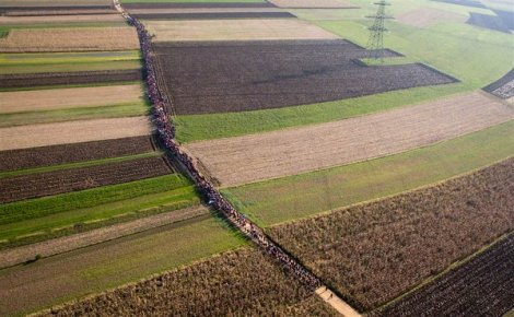 Refugees move through fields after crossing from Croatia, in Rigonce, Slovenia, (Darko Bandic/AP)