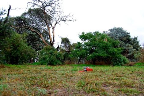 Wet harvest, Stewarton