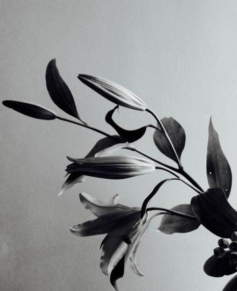 Shy lillies